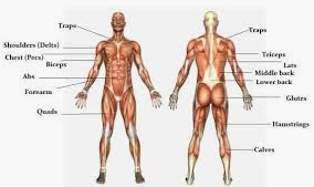 Personal training various muscles